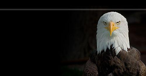 US Govt Eagle