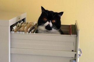 Cat Filing Cabinet